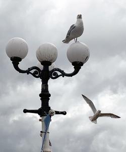 groupseagull